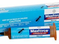 carpenter_ant_gel